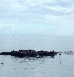 Birds of Half Moon Bay, VIC