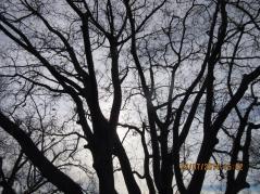 Winter Sun caught in trees
